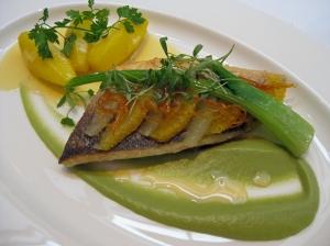 orrery fish
